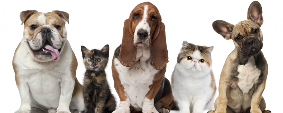 All about domestic animals